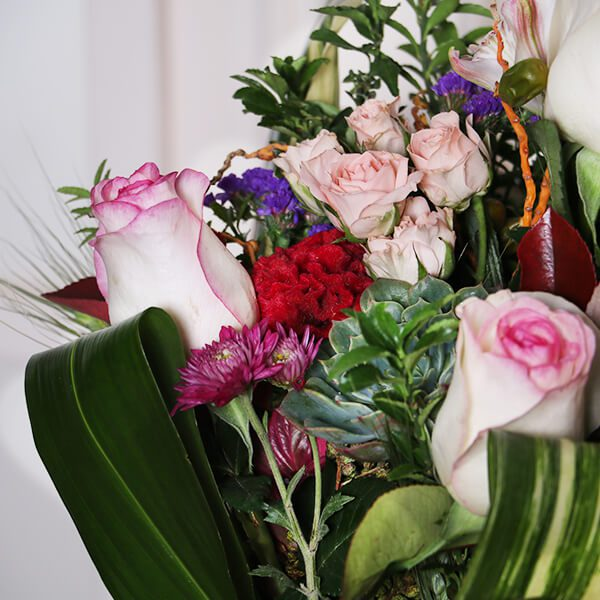گل رز تولد