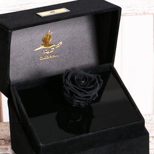 گل جاودان