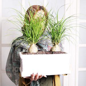 خرید گیاه