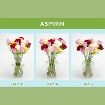 ماندگاری بیشتر گل رز ، افزایش طول عمر گل ، افزایش ماندگاری شاخه بریده ، افزایش عمر گل ، افزایش عمر گل رز