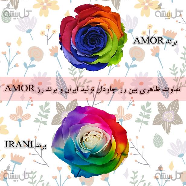 تفاوت بین رز جاودان خارجی و ایرانی ، رز جاودان آمور ، رز جاودان ایرانی ، خرید رز جاودان ، قیمت رز جاودان