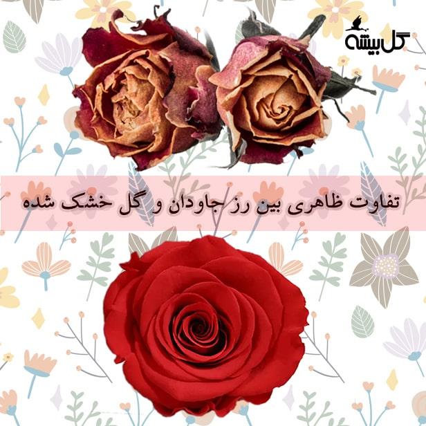 تفاوت رز جاودان با گل خشک ، خرید رز جاودان ، قیمت رز جاودان ، گل رز جاودان
