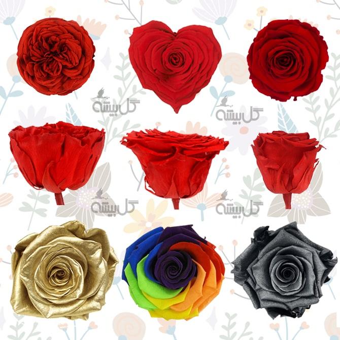 انواع گل جاودان ، مدل های گل جاودان ، رنگهای رز جاودان ، خرید رز جاودان ، قیمت رز جاودان
